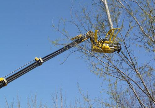 Servizio abbattimento piante e alberi su Parma