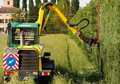 Potatura taglio siepi bologna nicolini for Tipi di schierandosi per le case