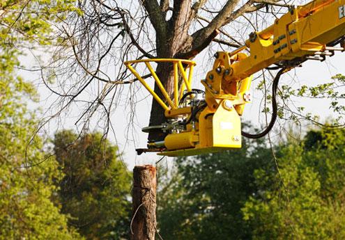 Abbattimento piante e alberi Verona