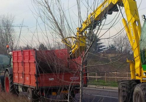 Abbattimento piante e alberi a Vicenza