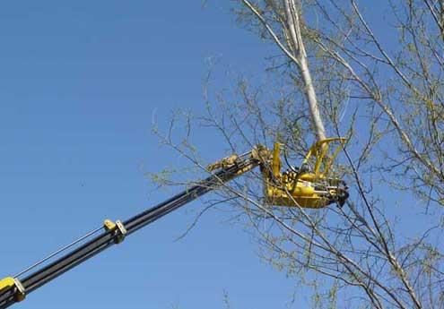 Abbattimento piante e alberi su Mantova